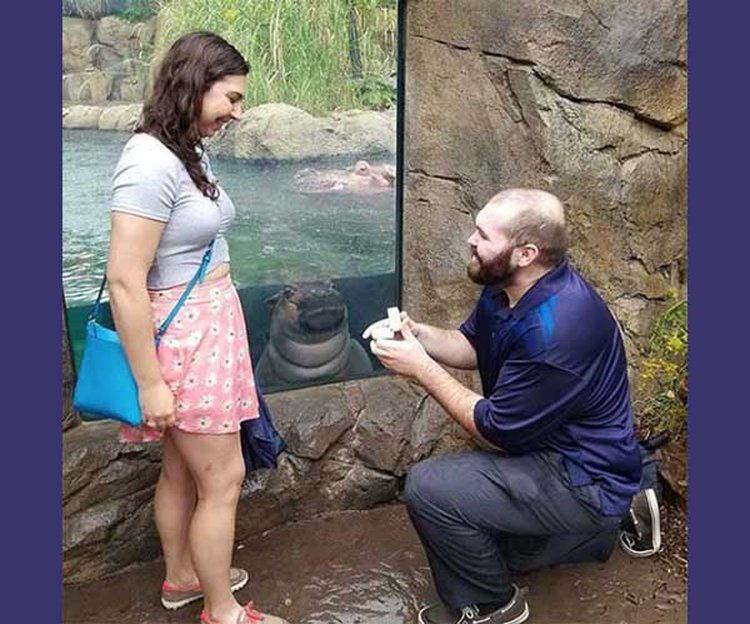 Baby Hippo Photobombs Marriage Proposal, Leaps from Local Inspiration to Internet Sensation